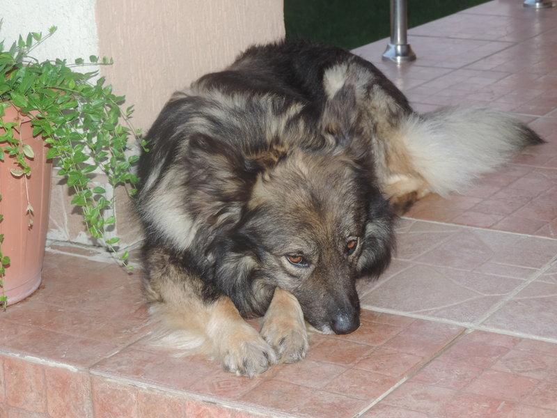 Ruxandra Luca adoptie caini fara stapan